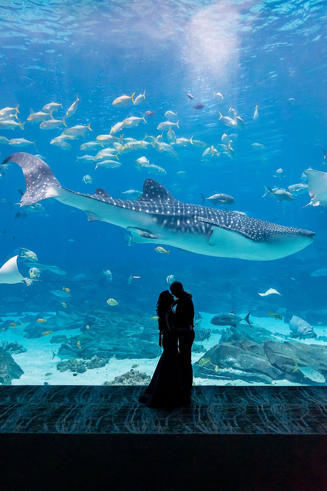 Engagement-photographers-Atlanta-Aquarium-0018